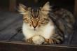 canvas print picture - Cat
