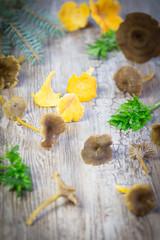 Edible Mushroom - Chanterelle