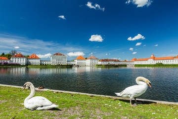 Swans in garden near the Nymphenburg Palace
