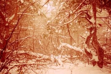 Fantastic Christmas mysterious winter snowy forest. Dramatic ove