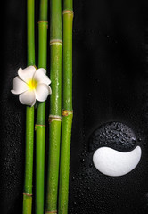 beautiful spa still life of symbol Yin Yang, frangipani flower a
