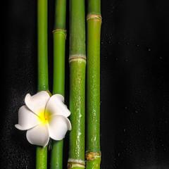 beautiful spa still life of frangipani flower and natural bamboo