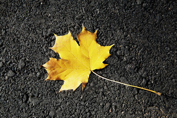 Fallen Leaf on the Road in Autumn.