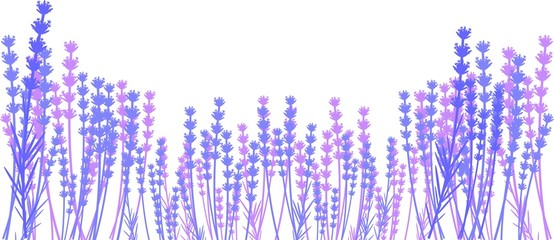 Silhouette of lavender