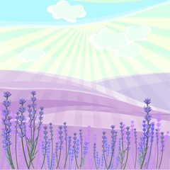 Landscape with lavender field