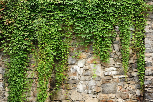 Deurstickers Wand Green ivy