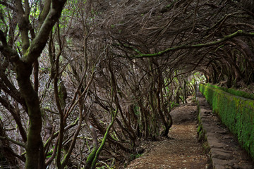Levada among bushes in the forest
