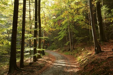 Trail through the picturesque autumn forest