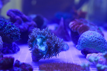 coral in aquarium