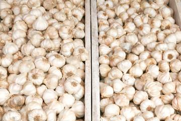 Fresh garlic for sale on the market