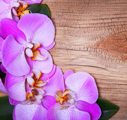 Pink Orchid Flowers on Wooden Background