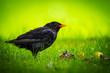 canvas print picture - wunderschöner Vogel im Garten