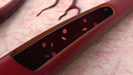 Artery, blood