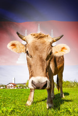 Cow with flag on background series - Cambodia