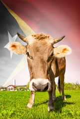 Cow with flag on background series - East Timor