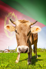 Cow with flag on background series - Eritrea