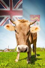 Cow with flag on background series - Fiji