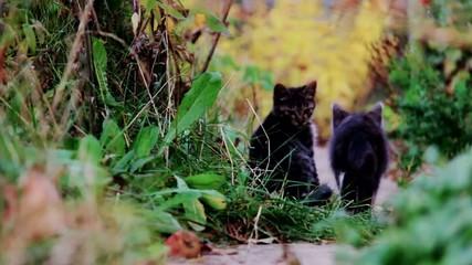 Kittens run played