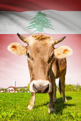 Cow with flag on background series - Lebanon