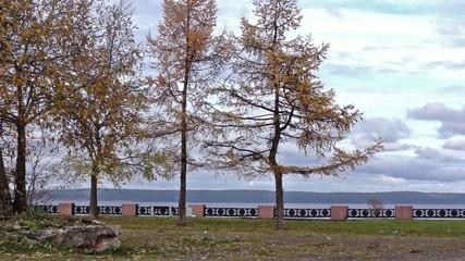Trees on lake embankment in autumn