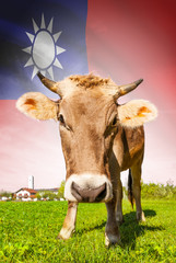 Cow with flag on background series - Taiwan - Republic of China