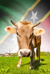 Cow with flag series - Federation of Saint Christopher and Nevis