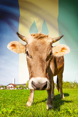 Cow with flag series - Saint Vincent and the Grenadines