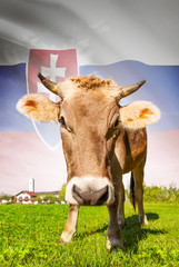 Cow with flag on background series - Slovakia