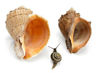 Snail and two sea cockleshells
