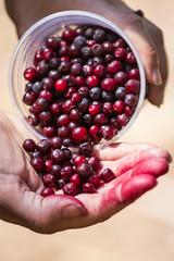 wild huckeberries