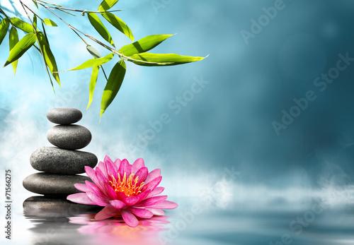 Waterlily avec des pierres et le bambou Poster