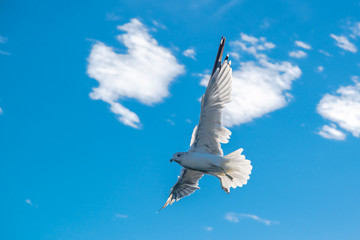 Graceful white seagulls