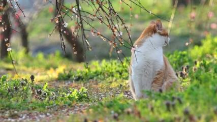舞い散る梅と猫