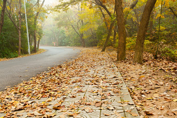 Road covered with fallen leaves