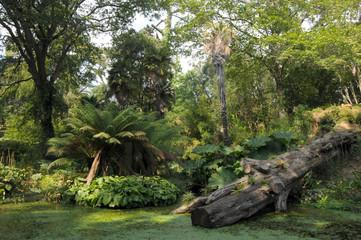 Pond and fallen tree in Abbotsbury gardens, Dorset