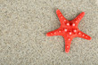 canvas print picture - Starfish on sand background
