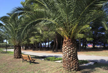 Palm trees on the avenue