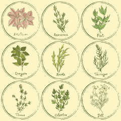 Stamp colored herbs set