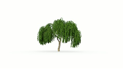 Wachsende Baum, 3D animation