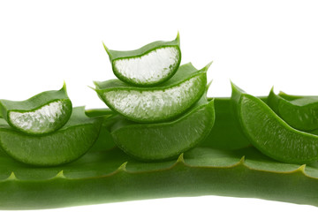 fresh aloe vera leaf isolated on white background