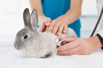 Vet examining a bunny with its owner