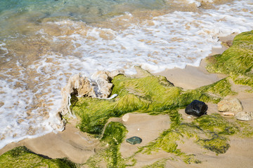 Seaweed Washed Up on Rocky Beach