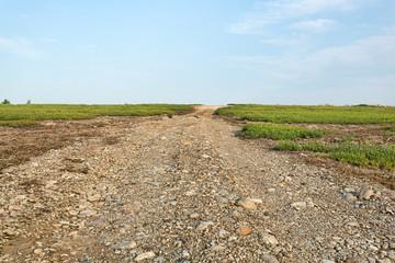 Utility road between blueberry fields