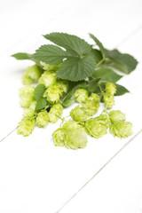 HopfenBlumen - Zutaten zum Bierbrauen