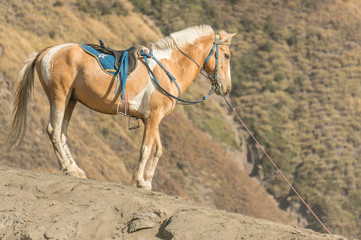 Horse at Bromo mountain