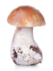 Raw boletus edulis isolated on white background