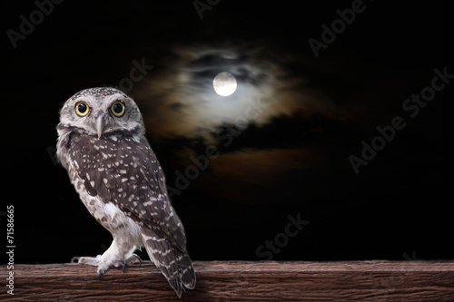 Foto op Plexiglas Uil Owl and full moon.