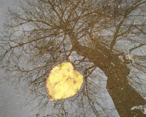 fallen leaf near tree