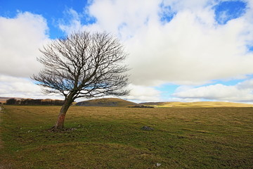 Lone tree in the Yorkshire Dales