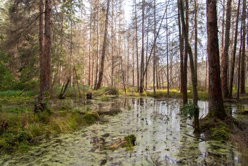 Rezerwat przyrody Stara Ruda